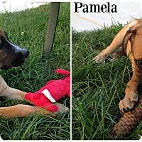 Adopt A Pet :: pamela - Kimberton, PA