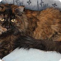 Adopt A Pet :: Suede - Prescott, AZ