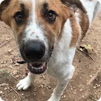 Adopt A Pet :: Tucker - Birmingham, AL