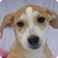 Adopt A Pet :: Bobbie Jo Petticoat *MEET ME!* - Wakefield, RI