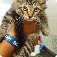 Adopt A Pet :: Dale - Sarasota, FL
