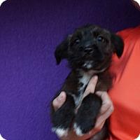 Adopt A Pet :: Daisy - Oviedo, FL
