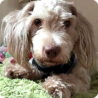 Adopt A Pet :: Fozzie - Staten Island, NY