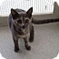 Adopt A Pet :: Sandy - Port Clinton, OH