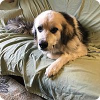 Adopt A Pet :: Murphy - Bristol, CT