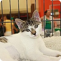 Adopt A Pet :: Cora (KL) - Little Falls, NJ