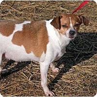Adopt A Pet :: Sadie - Clarksville, TN