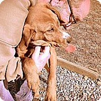 Adopt A Pet :: Shilo - Hartsville, TN