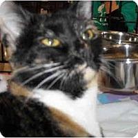 Adopt A Pet :: Dakota - Riverside, RI