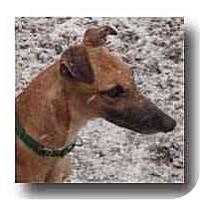Adopt A Pet :: Peepers - Roanoke, VA
