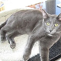 Adopt A Pet :: Shadow - Jeffersonville, IN