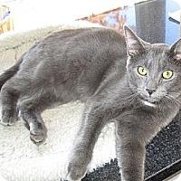 Adopt A Pet :: Shadow - Jeffersonville, IN