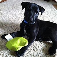 Adopt A Pet :: Boone - La Crosse, WI