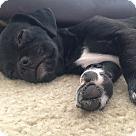 Adopt A Pet :: Scarlett
