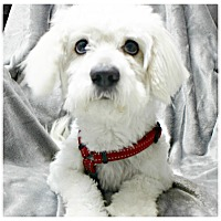 Adopt A Pet :: Mickey - Forked River, NJ