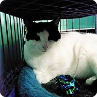 Adopt A Pet :: Dewey - Westbury, NY