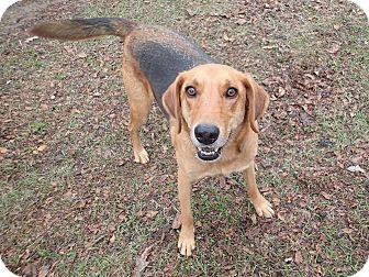 Hound (Unknown Type) Mix Dog for adoption in Ravenel, South Carolina - Ernesto