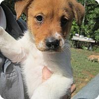 Adopt A Pet :: Calvin - Brookside, NJ