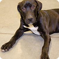 Adopt A Pet :: Pablo aka Bear - Midlothian, VA