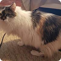 Adopt A Pet :: Katie - Fayette City, PA