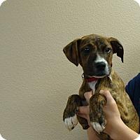 Adopt A Pet :: Clover - Oviedo, FL