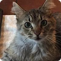 Adopt A Pet :: Titus 160325 - Atlanta, GA