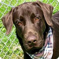 Adopt A Pet :: I'M ADPTD Chocolate Moose Nels - Oswego, IL