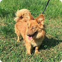 Adopt A Pet :: BRIANNA - Andover, CT