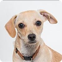 Adopt A Pet :: Crew - San Luis Obispo, CA