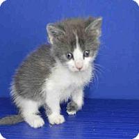 Adopt A Pet :: A025516 - Norman, OK