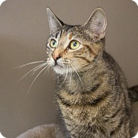 Adopt A Pet :: Lady - Elmwood Park, NJ