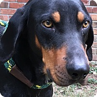 Adopt A Pet :: Hound Doggie - Olive Branch, MS