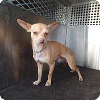 Adopt A Pet :: 66065 - Nogales, AZ