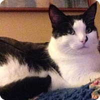 Adopt A Pet :: Patches C1552 - Shakopee, MN