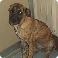 Adopt A Pet :: Pat - Newport, KY