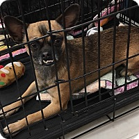 Adopt A Pet :: Peabody - Tucson, AZ