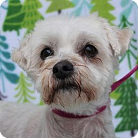 Adopt A Pet :: Della/Low fees/Spayed - Red Bluff, CA