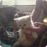 Adopt A Pet :: Seamus - Tarboro, NC