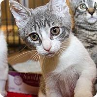 Adopt A Pet :: Jade - Irvine, CA