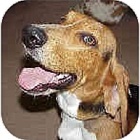 Adopt A Pet :: JJ (aka Jumping Jack  Flash - Phoenix, AZ