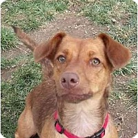 Adopt A Pet :: Mayzee - Meridian, ID
