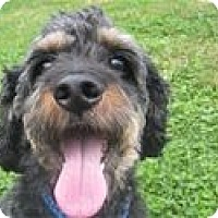 Adopt A Pet :: Cooper in PA - Westminster, MD