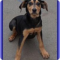 Adopt A Pet :: Trevor (In New England) - Brattleboro, VT