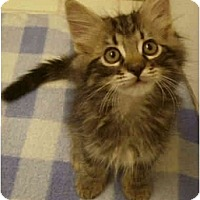 Adopt A Pet :: Pinkster - Irvine, CA
