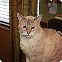 Adopt A Pet :: Lavender - Xenia, OH