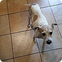 Adopt A Pet :: Lion - Wilmington, DE