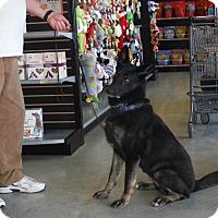 Adopt A Pet :: NOEL - SAN ANTONIO, TX