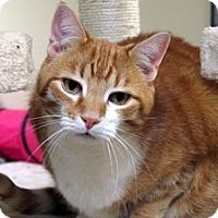Adopt A Pet :: Mikan - Norwalk, CT