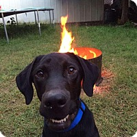 Adopt A Pet :: Samson - Woodstock, ON