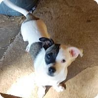 Adopt A Pet :: Rolf - Glendale, AZ